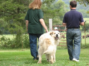 The Lucky Dog Blog: Bison