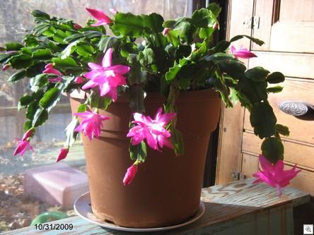 Cactus09